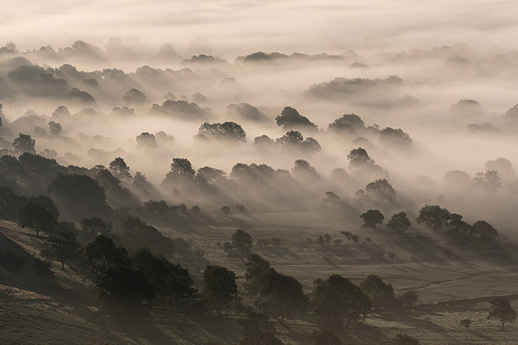 Castleton Misty Trees by Jason Bould