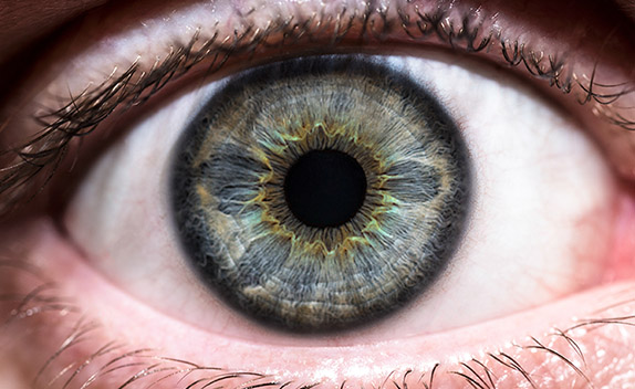 Human Eye by Jason Bould