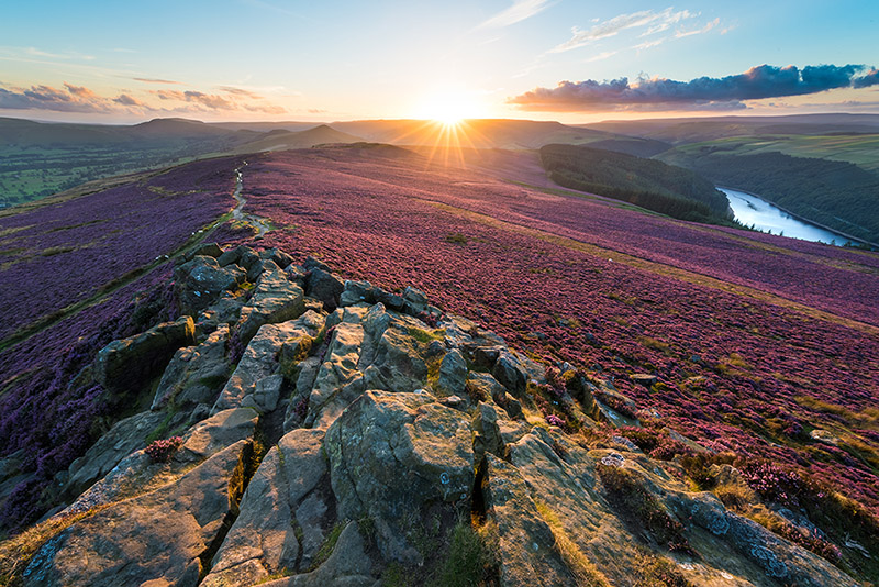 Win Hill Purple Heather Sunset by Jason Bould