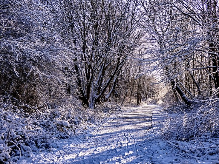 Winter Walk Sneyd Green by Alan Rust