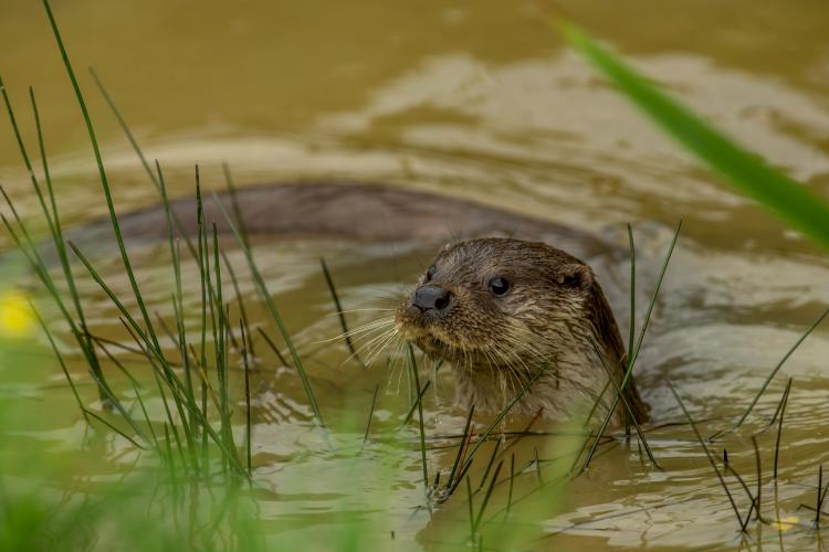 4th place by Rob Hartley - POTM June 2014