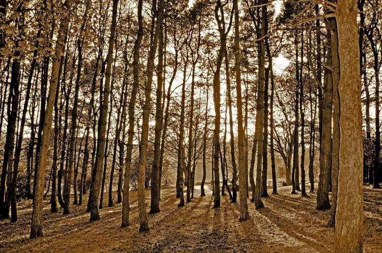 Parkhall Woods by Candace Skews