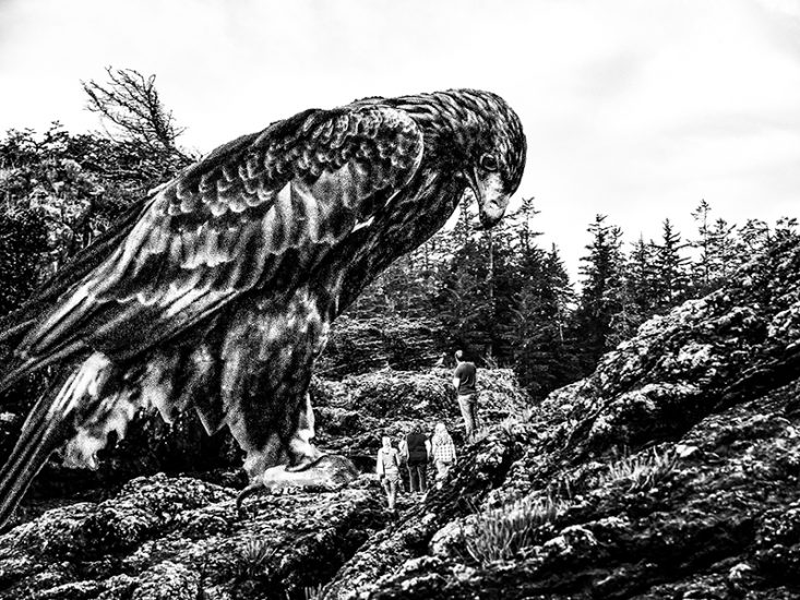 Eagle Eyed by Alan rust
