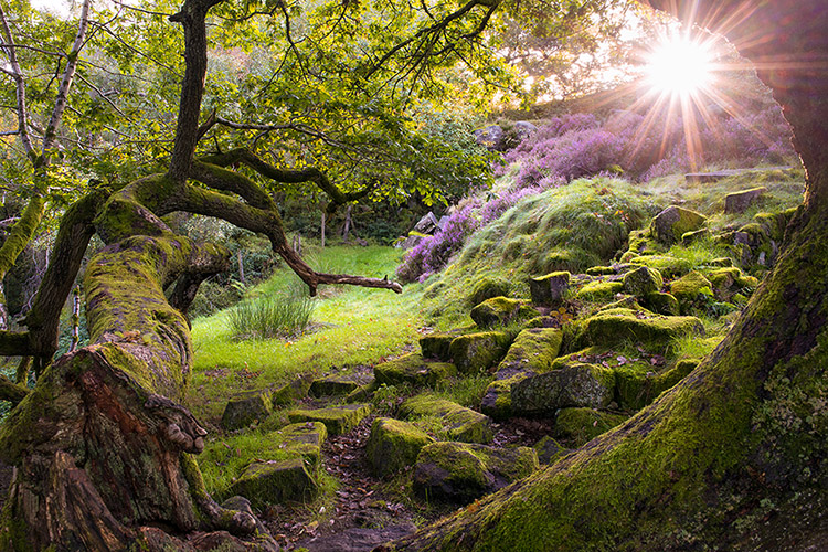 Padley Gorge Enchanted Forest by Jason Bould