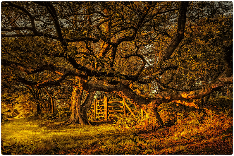 3rd by Phil Critchlow - POTM September 2019